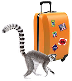 Monkey with a suitcase